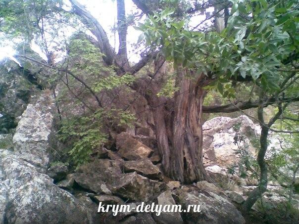 Новый Свет фото лес